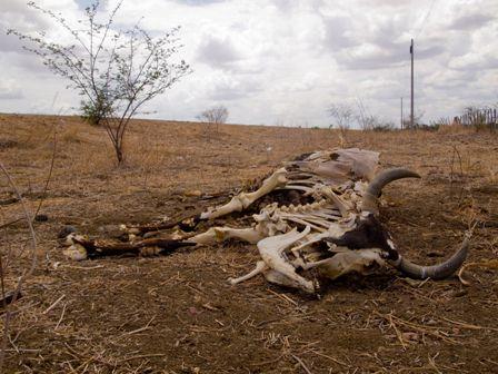 Animal morto devido a seca em Milhã/CE (Foto: Jan Messias/Tribuna do Ceará)