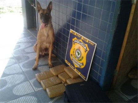 Ações foram possíveis graças ao uso de cães farejadores (Foto: PRF-CE / Divulgação)