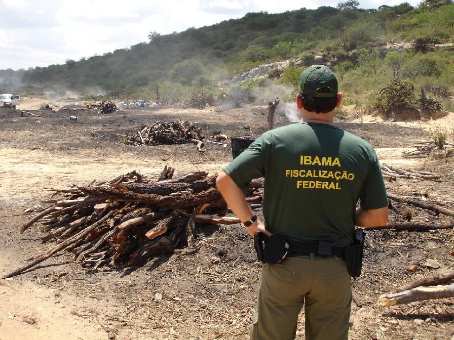 Ibama recebeu a madeira irregular apreendida em Sobral (FOTO: Centro de Inteligência em Florestas)