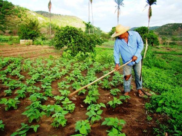 Muitoa agricultores que plantaram nas primeiras chvas, estão prestes a colher os frutos do feijão | Foto: Ilustrativa